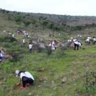 Se sembraron más de 15 mil árboles como parte del proyecto Mixteca Verde