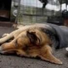 Denuncian pobladores de Teposcolula envenenamiento a perros