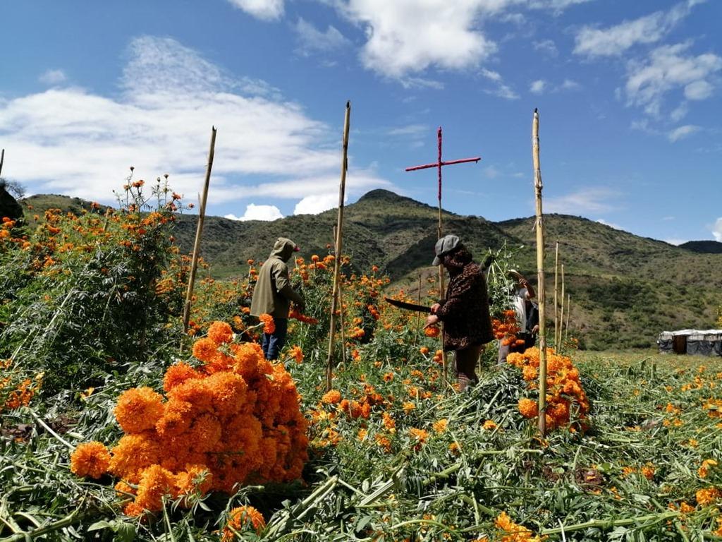 Resultado de imagen para cempasuchil en la region mixteca