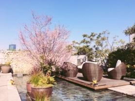 代官山 桜