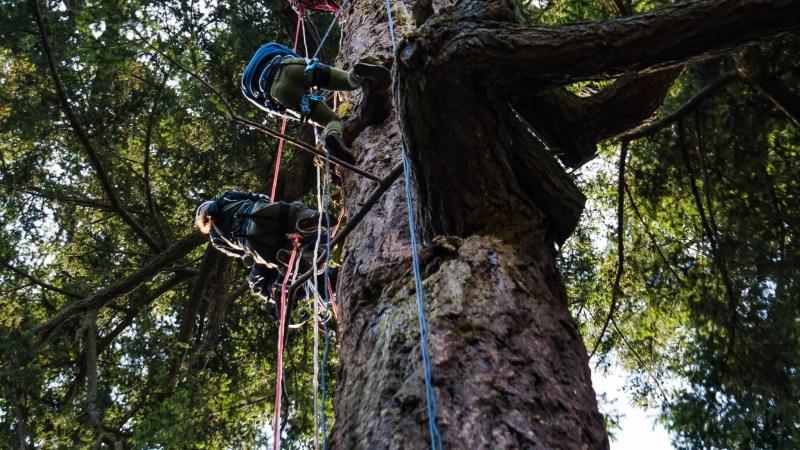 Deception Pass Canopy Descent