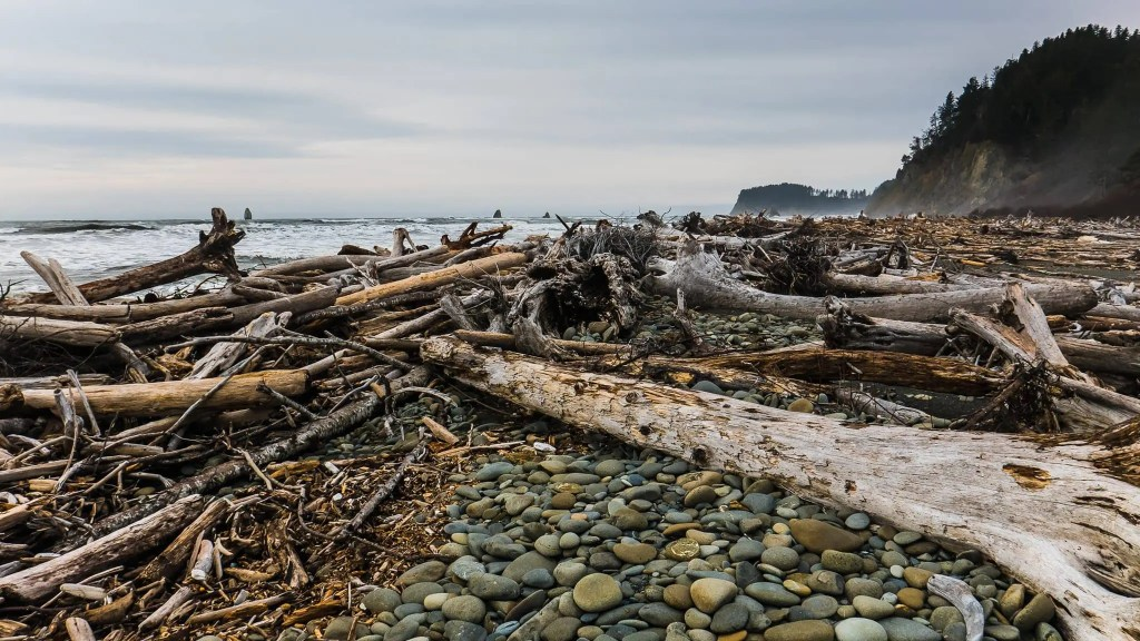 Capturing Chaos on Hoh River