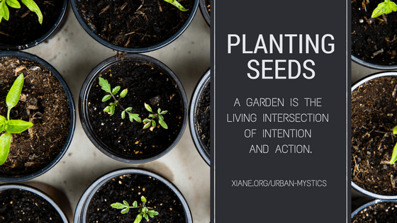 planting seed