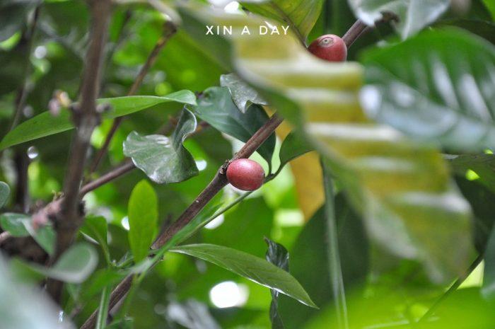 Kem Herba @ Hulu Langat