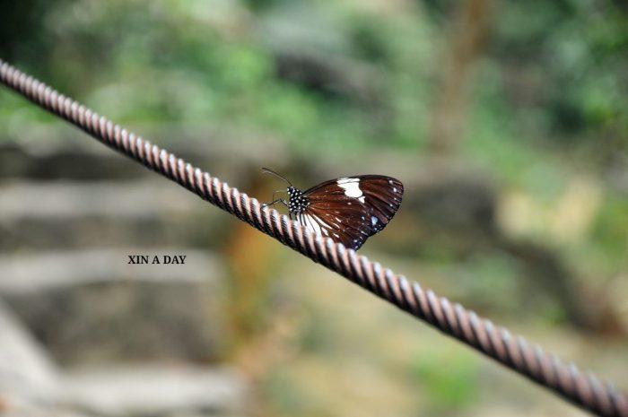 Taman Eko Rimba Sg Kanching