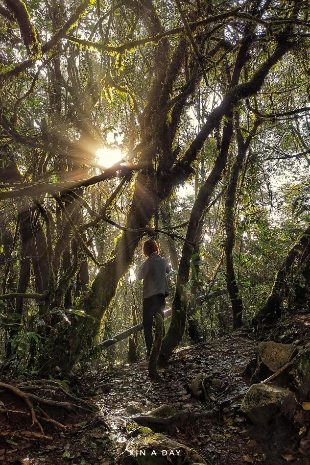 苔藓森林 Mossy Forest @ Cameron Highland