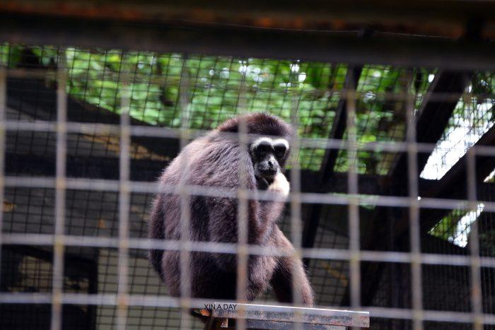 国家动物园 Zoo Negara Malaysia