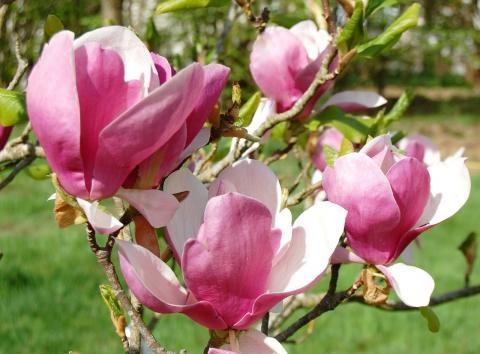 Цветы розового цвета с фото и названиями | Про-ЦВЕТЫ.рф ...