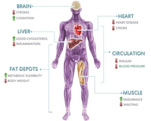 השפעות המערכת האנדוקנבינואידית