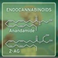 אנדוקנבינואידים - AG-2 אננדמיד