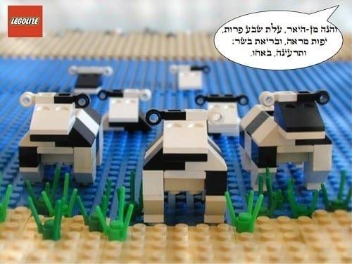 מקץ - פרות שמנות