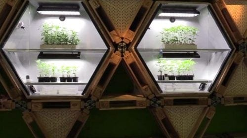חנות צמחי קנאביס איטליה