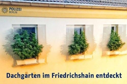 קנאביס על אדן החלון - גרמניה