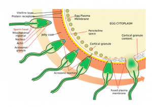 картинка лечение мужского бесплодия