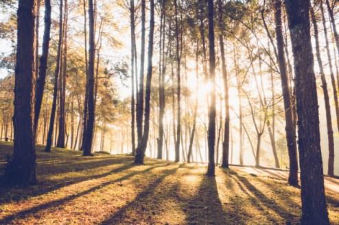 עצים עם שמש וצל