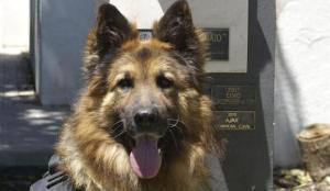 ajax-perro-policia