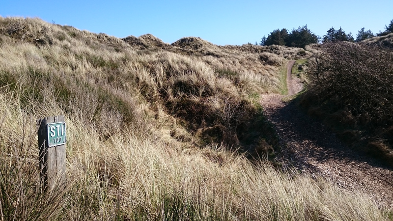 Aktivtipp: Wandern und Mountainbiking in Saltum Strand