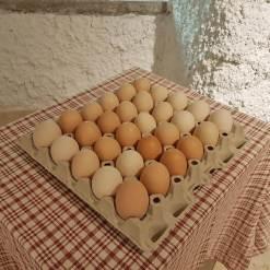 Frische Eier ab Hof kaufen