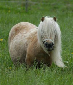 Bianca i hästböckerna om isa och Minigänget