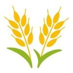 モチモチ食感ファッロの栄養と効果は?小麦アレルギーでも食べれる?