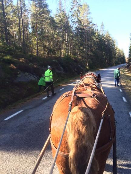 Dikesrensning från hästryggen i området kring Lur