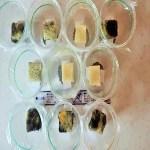 食べ物に生えるカビを防止する食品の研究|実験方法・観察・やり方・まとめ方