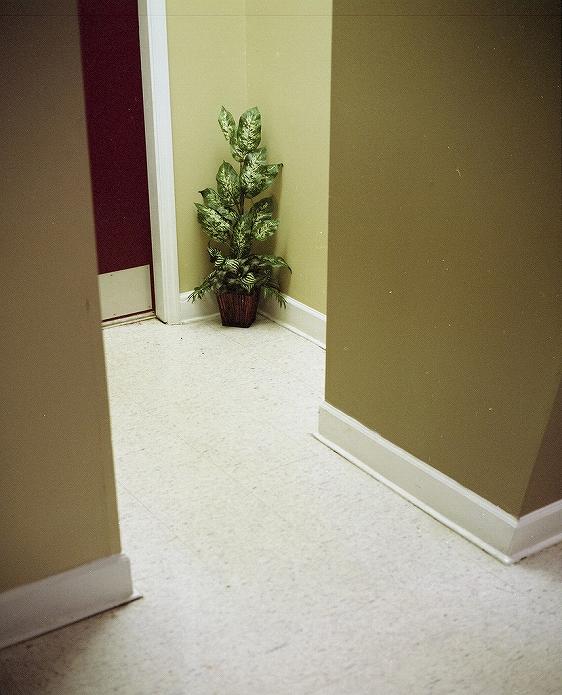 観葉植物をインテリアに 参考になる画像003