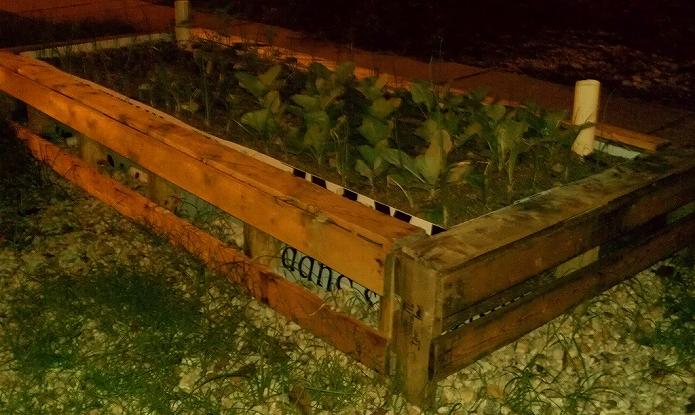 お庭でガーデニング・観葉植物をもっと可愛くおしゃれに!プランター・鉢を木製パレットでDIYする007