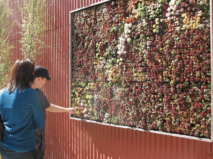 壁をおしゃれに観葉植物を飾って有効活用!壁掛けプランター・鉢・ガーデニングポットの使い方002