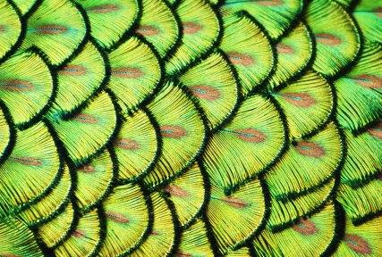 pattern composizione fotografica