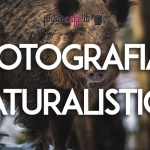 Photocafè.it - Fotografia naturalistica
