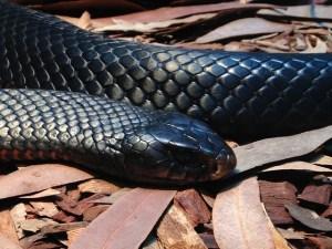 significado de sueño con serpiente negra