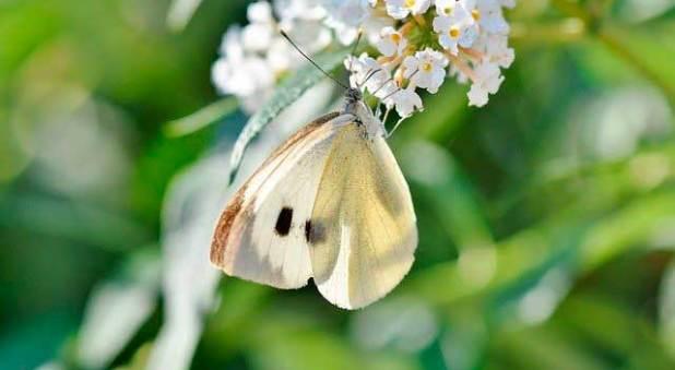 Soñar con una mariposa