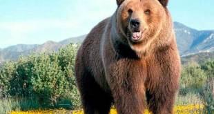 Significado de soñar con osos