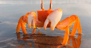 Soñar con cangrejos y su significado