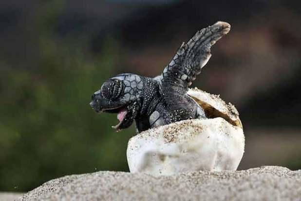 Que significa soñar con tortugas