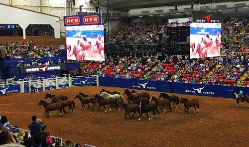 horses rodeo austin