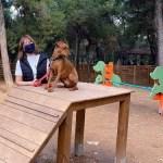 Αναβάθμιση των δύο πάρκων ζώων του Δήμου Παπάγου – Χολαργού