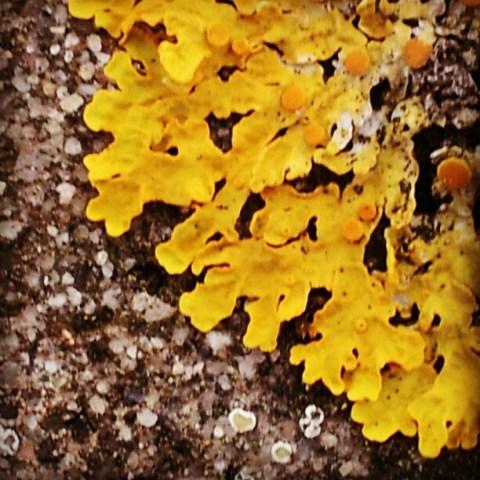 Fungus #1