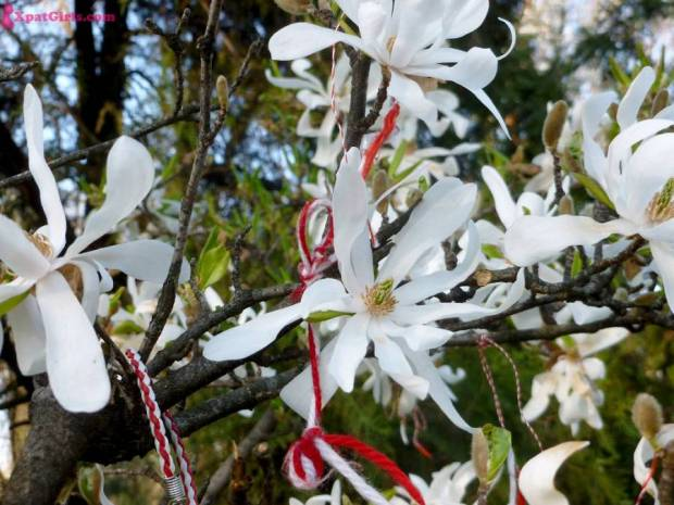Martisoare hanging amongst the blossoms in Cismigiu park