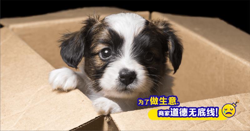 XplodeLIAO_宠物活体盲盒