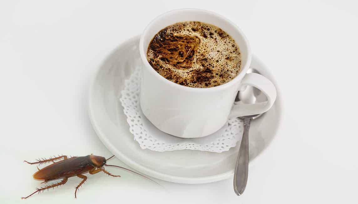 XplodeLIAO_咖啡和蟑螂