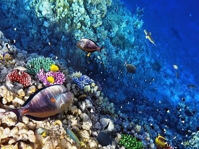 Barrera de Coral de Utila