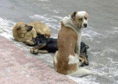 Έκπτωση 50% στους λογαριασμούς ύδρευσης από τον δήμο Αλεξανδρούπολης για τους καταναλωτές που θα υιοθετήσουν αδέσποτο ζώο συντροφιάς