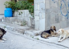 Ο απολογισμός δράσης για τα αδέσποτα ζώα