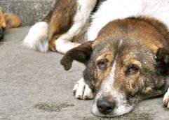 Ο Δήμος Θάσου θα καταγράψει τα δεσποζόμενα και αδέσποτα σκυλιά