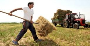 Στη Διαύγεια τα ονόματα των επιλαχόντων Νέων Αγροτών των Περιφερειών Θεσσαλίας, Κεντρικής Μακεδονίας και Ανατολικής Μακεδονίας – Θράκης
