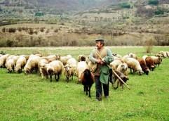 Συνάντηση κτηνοτρόφων της ΑΜΘ με τον Υπουργό ΑΑΤ κ. Μ.Βορίδη