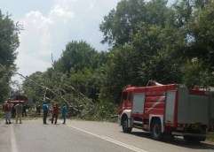 Κινδύνεψαν ζωές από πτώση δέντρου στα Αμισιανά