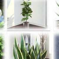 Πάρτε Τουλάχιστον Ένα από αυτά τα φυτά Σπίτι Σας!